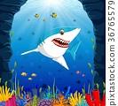 Cartoon shark under the sea 36765579