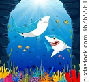 Cartoon shark under the sea 36765581