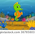 Tropical sea horse with beautiful underwater  36765603