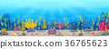 Underwater scene with tropical coral reef 36765623