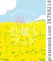 油菜花 油菜 油菜花田 36769214