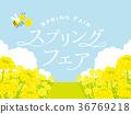 油菜花 油菜 花园 36769218