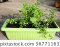 事件 活動 蔬菜 36771163