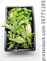 蔬菜 食品 原料 36771165