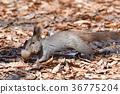 다람쥐의 이사 36775204