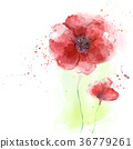 Stylized Poppy flowers illustration 36779261