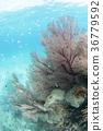 珊瑚 水生的 水下 36779592