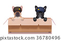 moving box couple of dogs 36780496