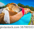 dog and owner siesta at beach 36780503