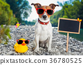 summer vacation dog 36780525