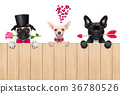 row of valentines dogs in love 36780526