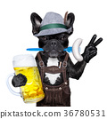 bavarian beer celebration dog 36780531