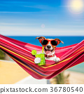 dog on hammock in summer 36780540