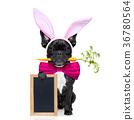 easter bunny dog 36780564