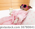 dog, relax, spa 36780641