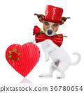 dog love valentines 36780654
