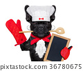 chef cook dog 36780675