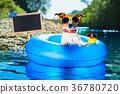 summer vacation dog blackboard 36780720