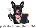 hungry dog  with blackboard 36780766