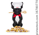 chef cook dog 36780770