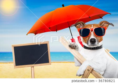 dog summer beach 36780821
