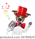 dog, mic, microphone 36780829