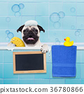 dog in shower 36780866