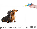 ill sick dogs with illness and vaccine syringe 36781031