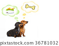 healthy dogs with food bowl and owner 36781032