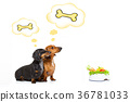 healthy dogs with food bowl and owner 36781033