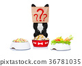 hungry dog with food bowls 36781035
