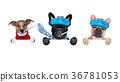 row of sick dogs 36781053
