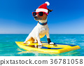 surfer christmas santa claus dog 36781058