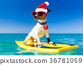 surfer christmas santa claus dog 36781059