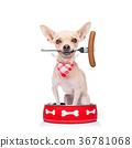 hungry dog inside food bowl 36781068