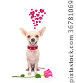 valentines love sick dog 36781069