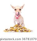 hungry dog 36781070