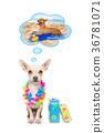 summer vacation dog 36781071