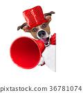 dog, megaphone, sale 36781074