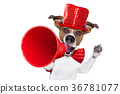 dog, megaphone, sale 36781077