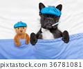sick ill dog 36781081
