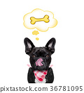 hungry dog   with speech bubble 36781095