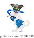scuba diving dog 36781099
