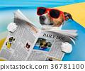 dog newspaper reading 36781100