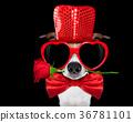 dog love valentines 36781101
