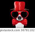 dog love valentines 36781102