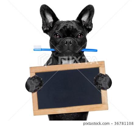 dental toothbrush dog 36781108
