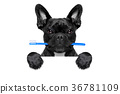 dental toothbrush dog 36781109