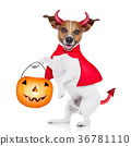 trick or treat dog 36781110