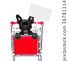 shopping cart dogs 36781114